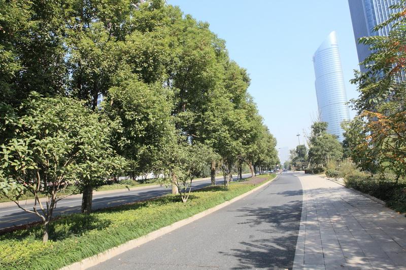 杭州富春江路市政道路景观绿化工程